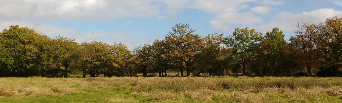 Wide screen landscape photo of the trees at Bramshot Farm Country Park