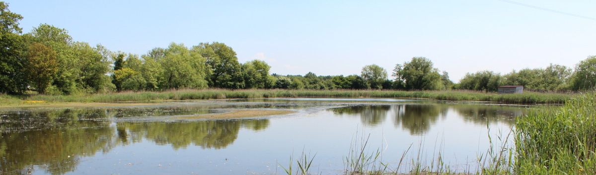 Wide view image of one of the ponds at Edenbrook Country Park