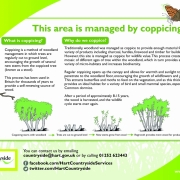 Coppicing poster